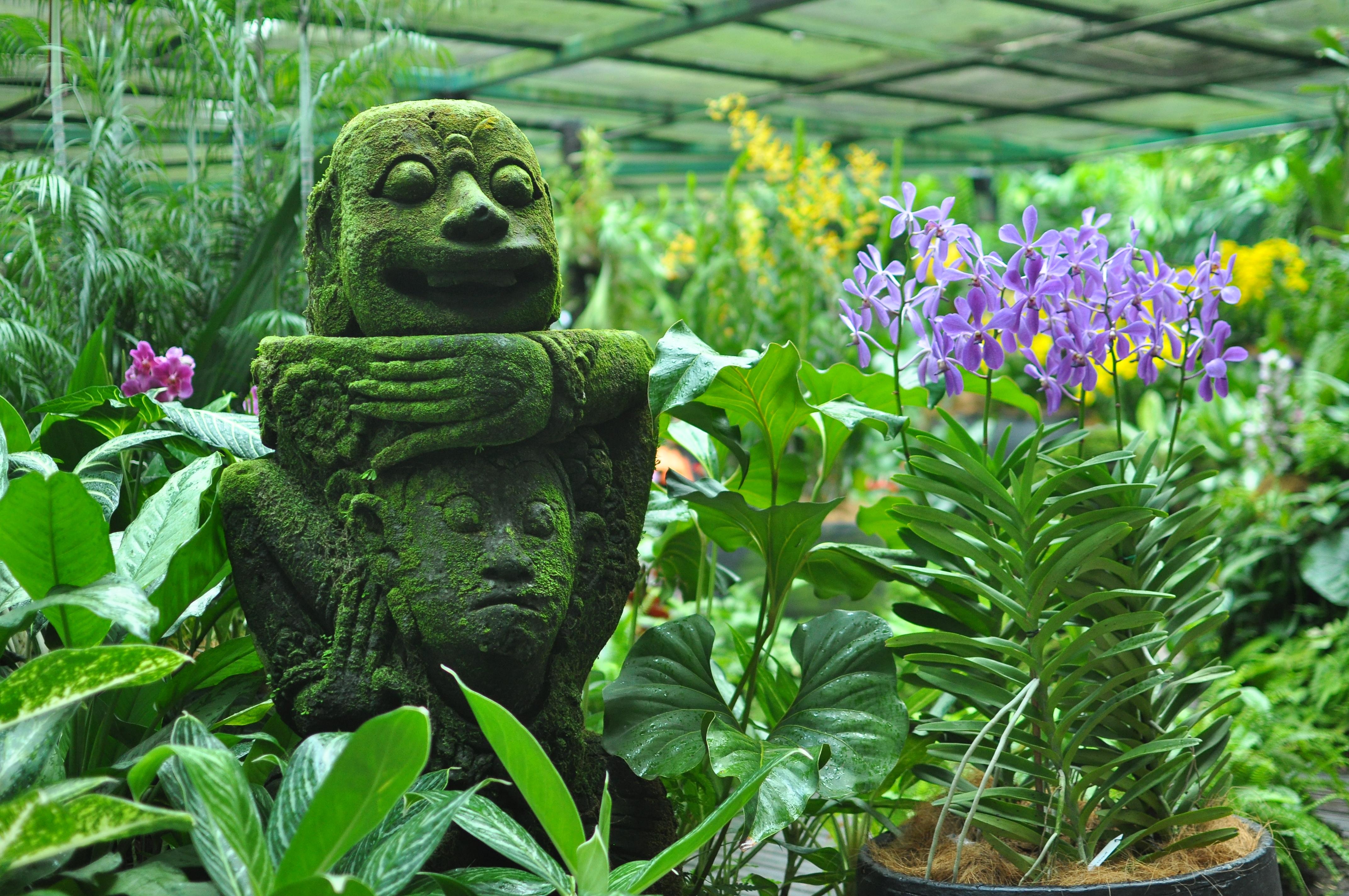 je jardin botanique - les orchidées