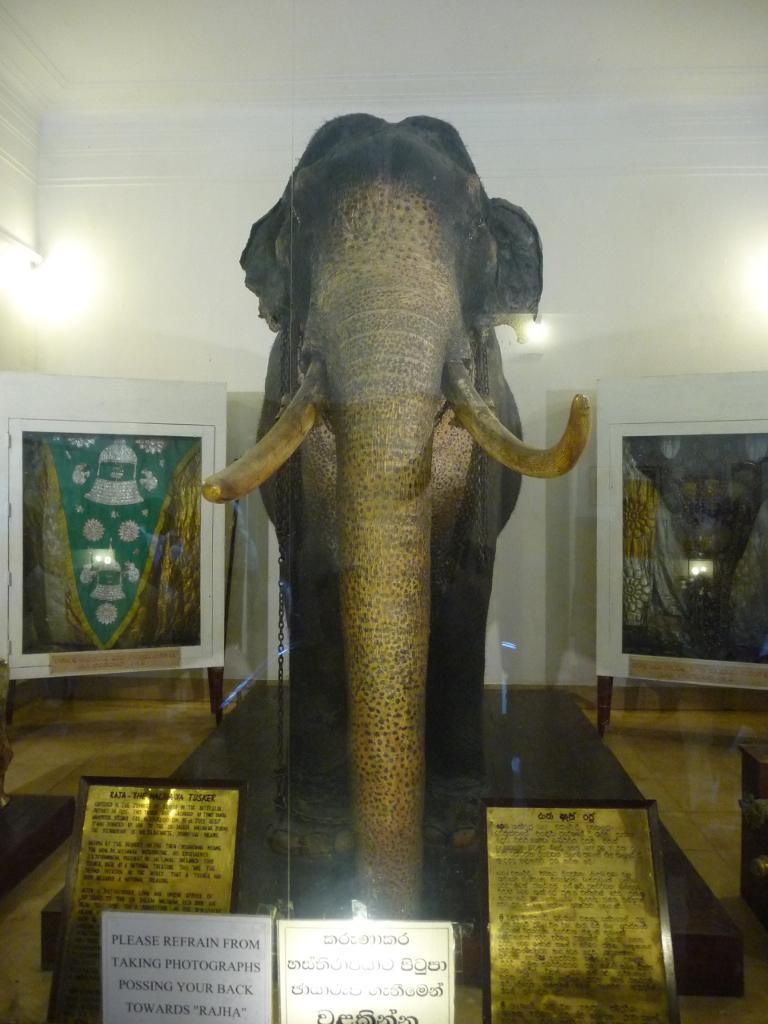 Le vénérable éléphant Rajah